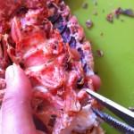 Salade de homard rôti, vieilles tomates et mozzarella - Décortiquer les queues à l'aide de ciseaux.