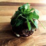 French Burger - Procéder au montage du burger en alternant la sauce aux herbes, le steak, l'oignon caramélisé et la mâche.